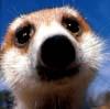 mongoosey userpic
