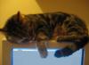 sleepycat, sleepy