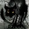 shuck cat