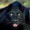 black_panther3 userpic