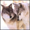 ladywolf0804 userpic
