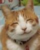 hakkai like cat