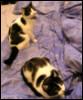 dr_kitten userpic