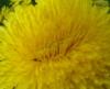 korall7 userpic