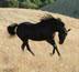 sydney94541 userpic