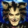 Chedi Daan: cats