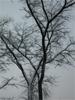 Дерево (Томск)