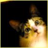 krieg_weasel userpic