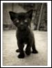 katenki userpic