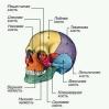 тоже череп