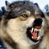 wild_wood_wolf userpic