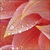 sun_lotus userpic