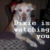 Phoenix Anew: Dixie
