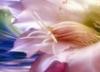 цветок-раз