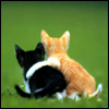 Robyn B.: kitty love