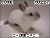 Cyd: cute fuzzy overlord