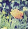 ilo_solange userpic