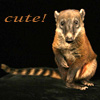 cutecoati: Coati9