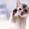 catatonicc userpic