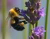madison bee