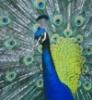 euniceofindia userpic