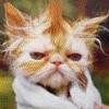 рыж кот