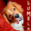 Humphrey Bumble Adorable
