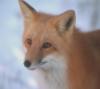 foxy555 userpic