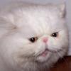 durochka_zoja userpic