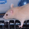 rat on computer - 2