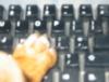 jimmythedog userpic