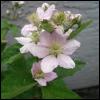 Alix (Tersa): Gardening (tersa)