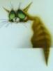 кот странный