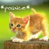 1Kitty Pounce!