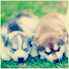 puppies by tmg_icons