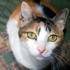 cats_lucy