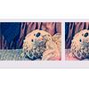 «..¨zkrásnět¨..»: teddybear ; explore