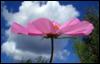flower_sun userpic