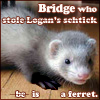 ferret!bridge