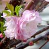 scratchedvinyl userpic
