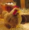 meengreen userpic