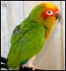 micahbird