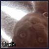 thestraycrash userpic