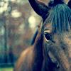 horse says hullo
