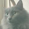 greymog userpic