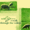 sheepy sheeps