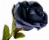 blak_roses userpic