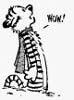 The Dork: Calvin Wow
