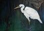 AKB, White Heron