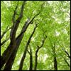 green_kiwigirl userpic